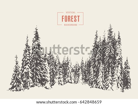 pine forest  vector...