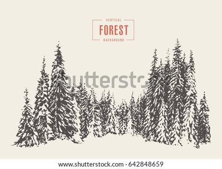 Pine forest, vector illustration, hand drawn, sketch