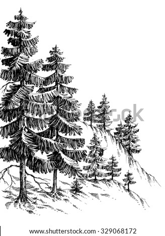 pine forest  winter mountain