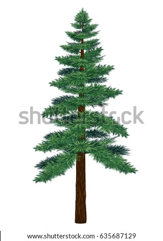 Pine tree vector on white background.Pine tree by hand drawing.