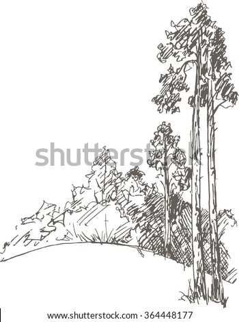 pine trees and bushes drawing