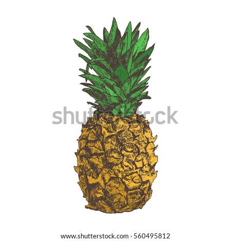 pineapple hand drawn in sketch