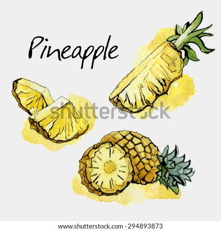 Pineapple. Watercolor painting on white background. Vector illustration
