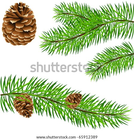 pinecone and pine branches - vector illustration