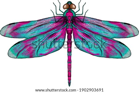 pink and blue dragonfly with