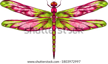 pink and green dragonfly with