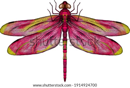 pink and yellow dragonfly with