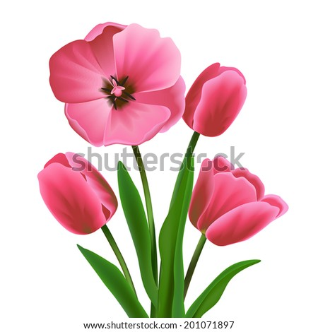 pink beautiful blossoming tulip