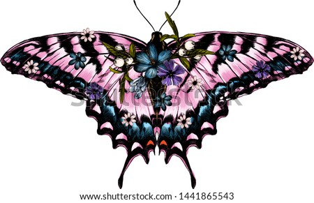 pink butterfly with open wings