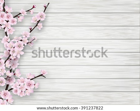 pink cherry blossom branch on