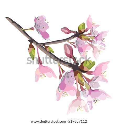 pink cherry blossom realistic