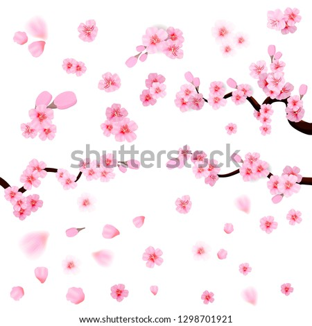 pink cherry blossom  with