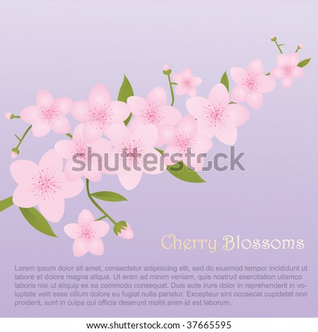 Pink Cherry Blossoms - stock vector