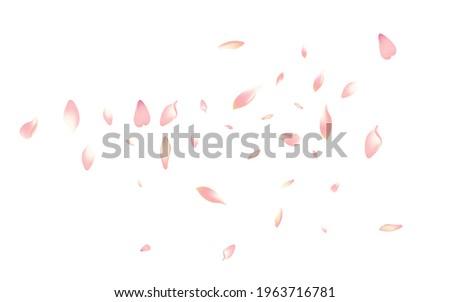Pink Cherry Petal Vector White Background. Pastel Aroma Peach Petal Congratulation. Sakura Petal Bright Cover. Delicate Apple Petal Pattern.