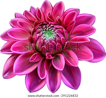 pink colored dahlia flower