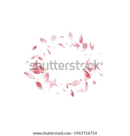 Pink Flower Petal Vector White Background. Pastel Wallpaper Sakura Petal Texture. Apple Petal Invitation Congratulation. Modern Lotus Petal Backdrop.