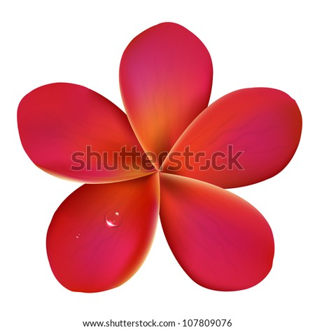 Pink Frangipani With Water Drops, Isolated On White Background, Vector Illustration