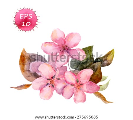 pink fruit tree flower  apple