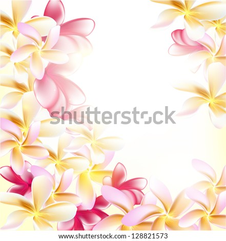 Pink gardenia flowers on white background for design