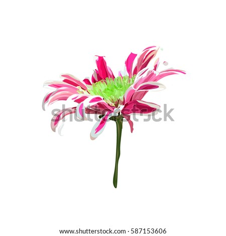 pink hand drawn chrysanthemum