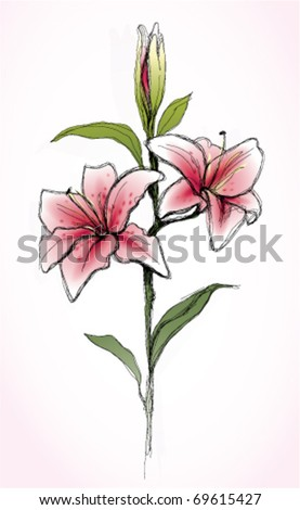 stock vector Pink Lily flower realistic sketch not autotraced