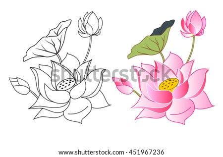Pink Lotus Flowers And Bud Coloring Vector Illustration