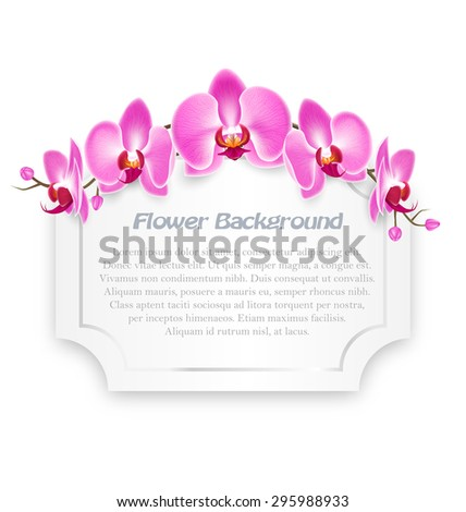pink orchid flowers with