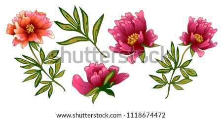pink peony flower in a vector