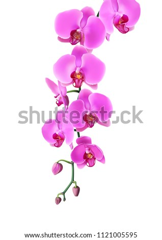 Pink purple orchids flowers hang down in branch isolated on white background. Vector illustration of realistic orchids flowers hang from top to bottom.