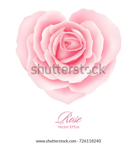 pink rose flower in heart shape