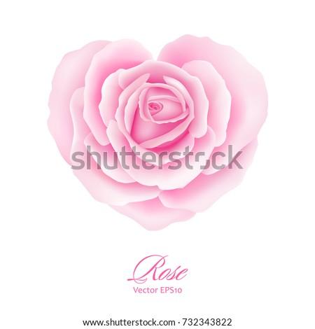 pink rose flower in heart shape