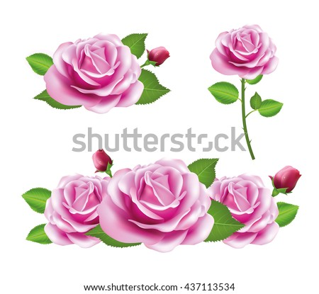 Pink Rose Flower Isolated On White Background Vector Roses Realistic