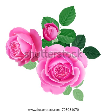 pink rose isolated bouquet