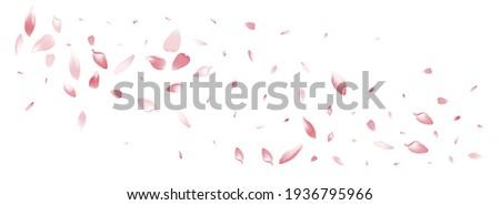 Pink Rose Petal Vector White Background. Color Romantic Lotus Petal Illustration. Peach Petal Japan Congratulation. Falling Apple Petal Template.