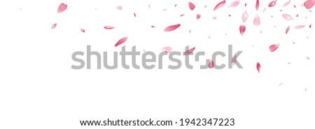 Pink Rose Petal Vector White Background. Transparent Aroma Lotus Petal Design. Peach Petal Springtime Poster. Japanese Cherry Petal Card.