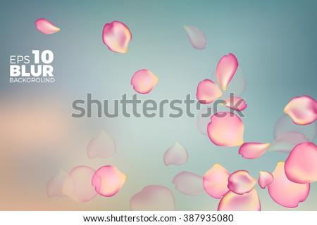 pink rose petals in soft color