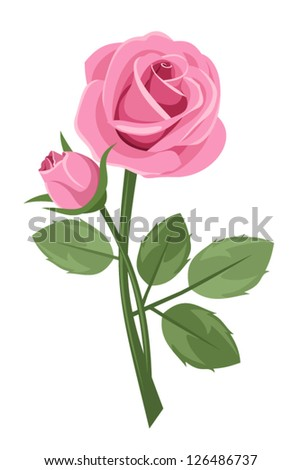pink rose with stem isolated on