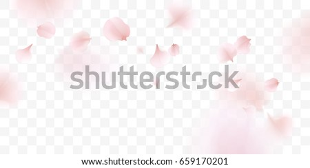 stock-vector-pink-sakura-falling-petals-vector-background-d-romantic-illustration