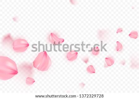 Pink sakura falling petals vector background. 3D romantic illustration. Transporent banner with sakura. Love card