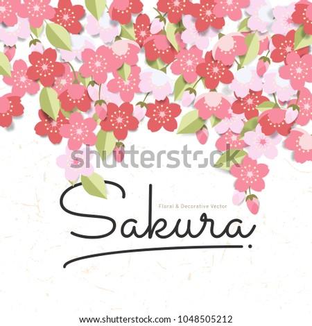 pink sakura flowers background