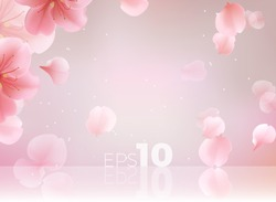 Pink sakura petals fall to the floor. Isolated vector studio background