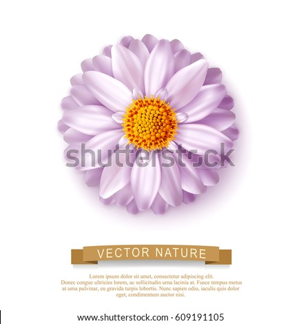 pink vector flower isolated on
