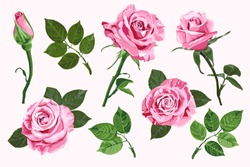 Pink vector roses and green leave elements set isolated on the white background for floral decoration