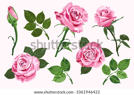 pink vector roses and green