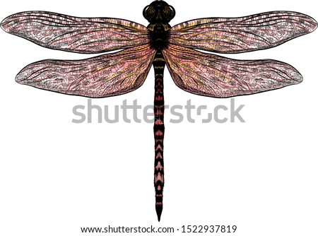 pink yellow dragonfly with