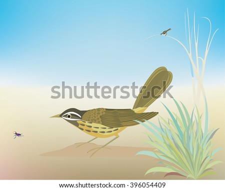 pipit  pipit catching the