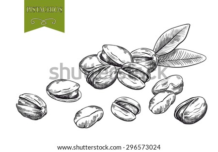 pistachios, set of hand drawn sketches on white background