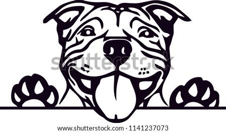 Pit Bull PitBull Terrier dog breed pet