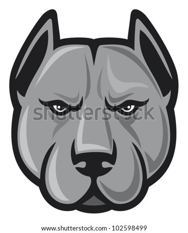 pit bull terrier head