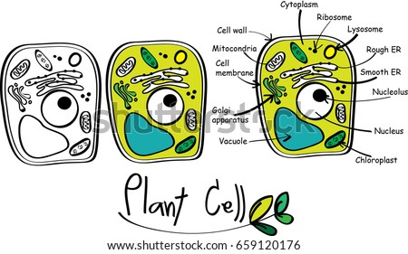 Plant cell doodle vector.
